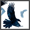 isis: ravens from the cover of The Dream Thieves (raven cycle)