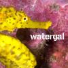 watergal: (seahorse)