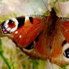 livelyfibers: (moth)