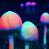 livelyfibers: (shroomage)