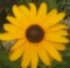 fanficster: flower (daisy)