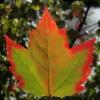 alfagot: (Канада)