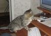 lara_l: (кот)