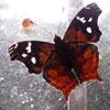 sistabro: (butterfly in web)