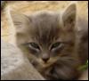 tey: kitten (kitten)
