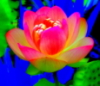 tumblingdays: Oversaturated Photo of a flower (intimate)