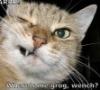 kerkevik_2014: (Talk Like a Feline Day)