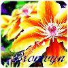 bronwynferchdai: Bronwyn Flower (Default)
