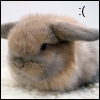 surexit: A fluffy bunny with very downturned ears. (:()