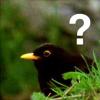 zeittari: (bird)