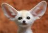 pablo_escobar: (Ears)