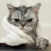 misbegotten: As mad as a cat in the bath (Animal Cat in the Bath)
