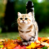 beach_baby: (Seasonal: Fall Cat leafs)