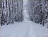azalaisdep: Path through woods in snow (snow_path)