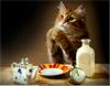 arinka: cat's prayer (Default)
