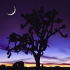 red_trillium: my inspiration or creative icon, a purple moon rise and Joshua tree (Night Sky and Joshua Tree)