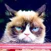 mornelithe_falconsbane: (Cat)