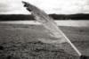 learn_to_flying: (до странности легко строка целует лист..)
