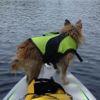 starandrea: (mimi paddle boarding)