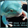 la_rainette: (blue frog)