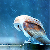 ofwinterspast: (winter owl)