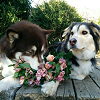 quirkyandquiet: (stock ; dogs and flowers)