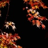 umadoshi: (autumn leaves 2 (dhamphir))