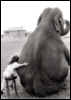 tumblingdays: B&W Photo of a little girl hugging an elephant (ed)