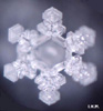spirits_soul: Photo by Matsuru Emoto Permission to use granted. (Default)