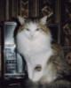 elgatodomestico: Radiocat (Radiocat)