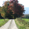 bikingandbaking: photo of a dirt road and fall foliage (beware of the dirt bike)