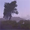 maranatah: (tree)