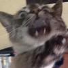 mieldyne: (nutherpissedoffcat)