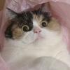 mieldyne: (ohaiitsanothercat)