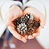 heartisanawesomepower: A woman's hands, held in a shape that suggests a heart, holding a collection of snow-dusted pine cones. (heart of nature)