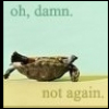 thisisnotajournal: (turtle)