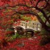 sylvaine: A white wooden bridges surrounded by red-leafed trees. ([gen] building/burning bridges)