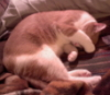 aedifica: My cat curled up on the couch with his paw over his eyes (Oliver on couch)