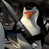zoos: (Pingvin)