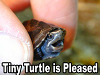 "rosefox: A tiny turtle and the caption ""Tiny Turtle is Pleased"". (pleased, turtle)"