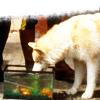 jamethiel: Dief drinks from a fishtank (DiefFish)