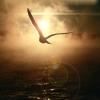 sablin27: (bird)