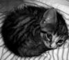 sebenikela: (kitten ball)