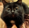 mistee: (black cat)