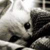mistee: (snuggly cat)