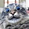 mistee: (lsd cat)