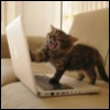 kittys_corner: Damn you, computer! Write my story for me! (Writer cat)