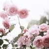 shesellsseashells16: (flowers)