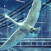 avia: Painting of a swan flying against a background of city night sky. (swan flight)