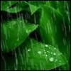rainwatcher: (rainleaves)